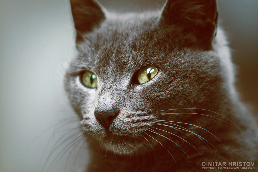 Green Eyes Cat photography animals  Photo