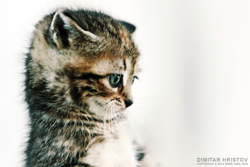 Baby Cat photography animals  Photo