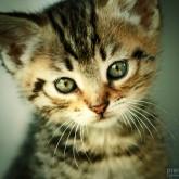 Cute kitten with big mustache