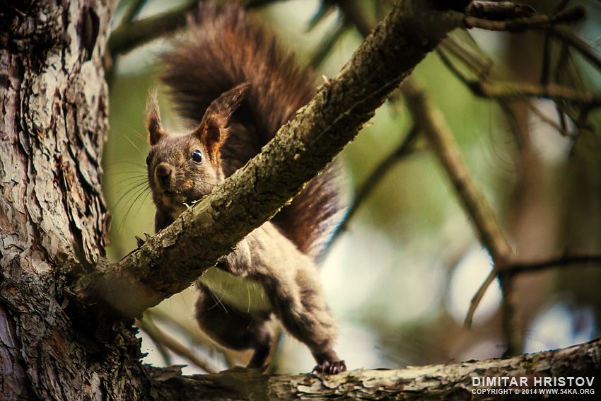 Funny squirrel photography animals  Photo