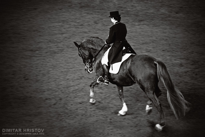 Black Horse Dressage   Equestrian sport photography equine photography black and white animals  Photo