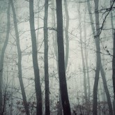 Dark Misty Forest