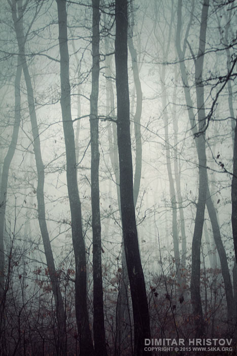 Dark Misty Forest photography other  Photo