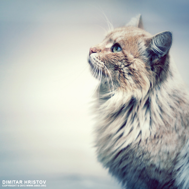 Kitten look photography featured animals  Photo