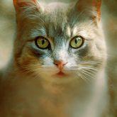 The Cat Eyes
