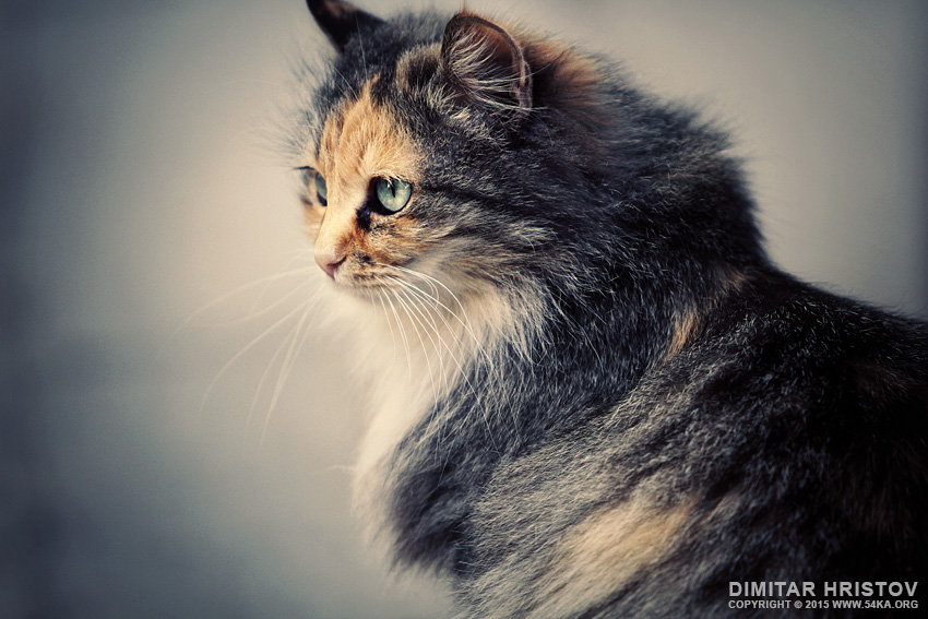 The Sad Street Cat photography top rated featured animals  Photo