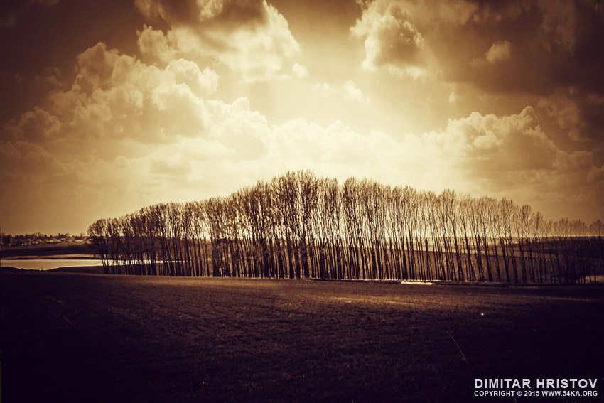 Sunshine Forest Landscape photography landscapes daily dose  Photo