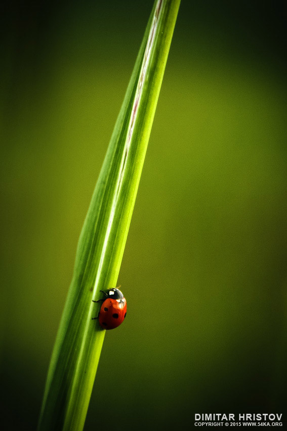Ladybug photography macro featured  Photo