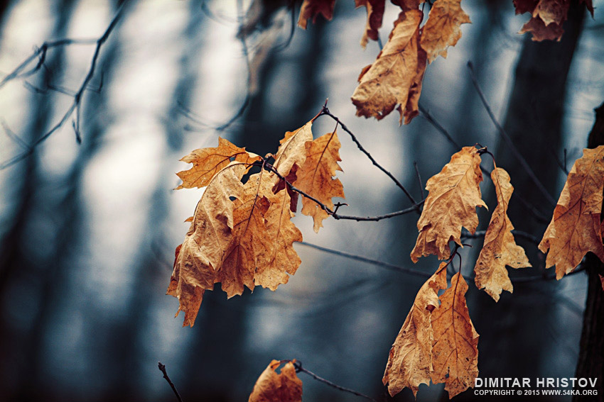 Forest autumn leaves photography daily dose  Photo