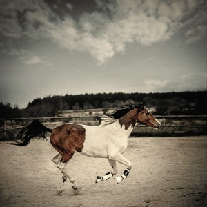 Galloping Paint Horse