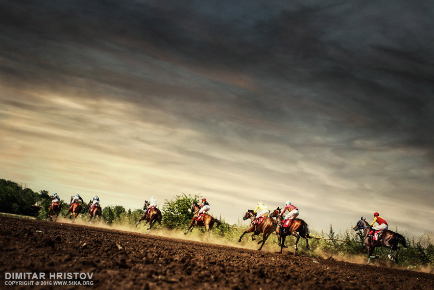 Running horses competition on the stormy sky photography featured equine photography animals  Photo