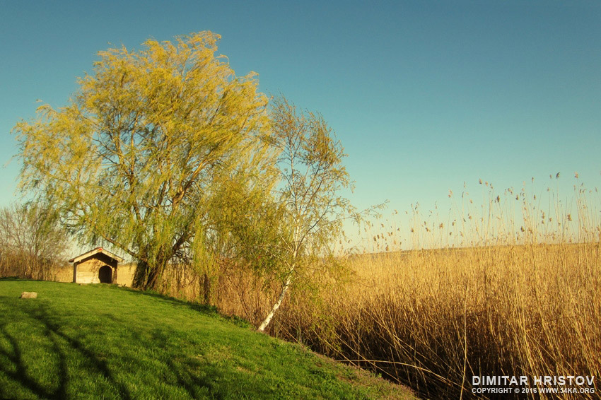 Summer landscape on the lake photography landscapes featured  Photo
