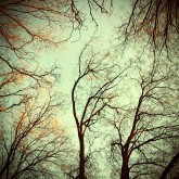 Upper Branches Of Woods