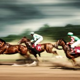 Gamble horses – Race horses galloping