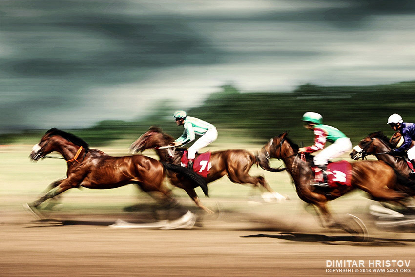 Gamble horses   Race horses galloping photography top rated featured equine photography animals  Photo