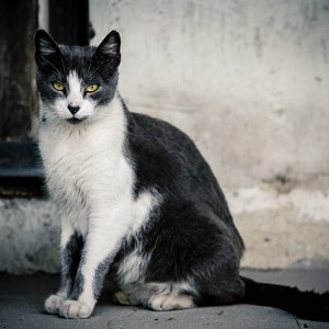 Beautiful cat on the street