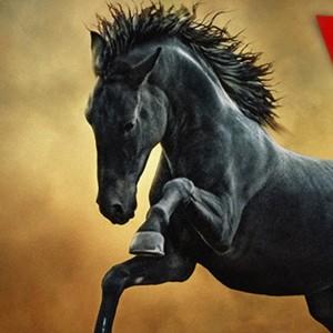The Horses – Seminar – Lecturer Dimitar Hristov