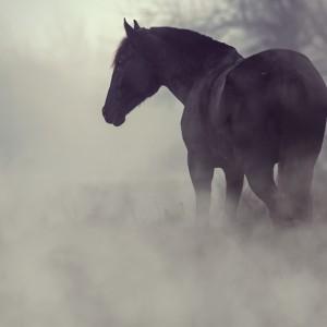 Black horse in the dark mist