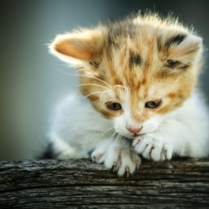 Cute little cat