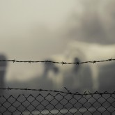 Horses in the mist behind barbed wire