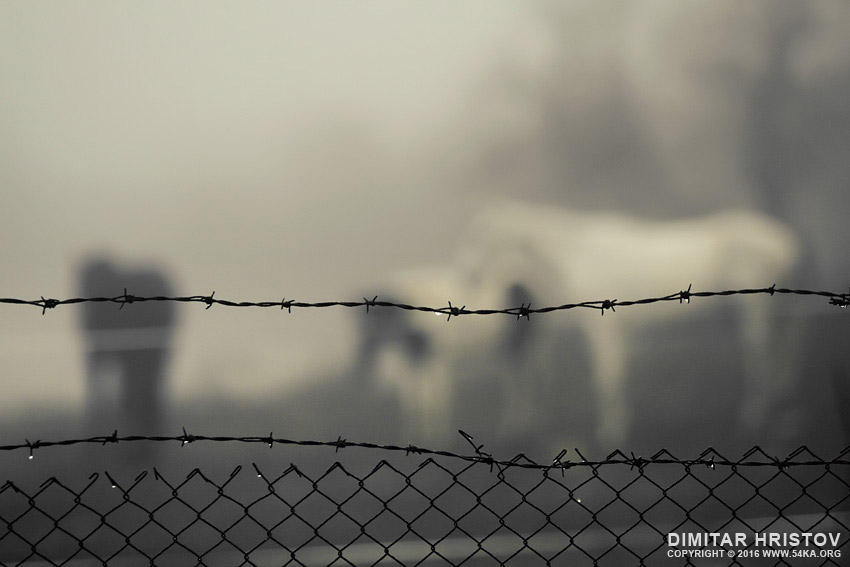 Horses in the mist behind barbed wire photography other equine photography animals  Photo