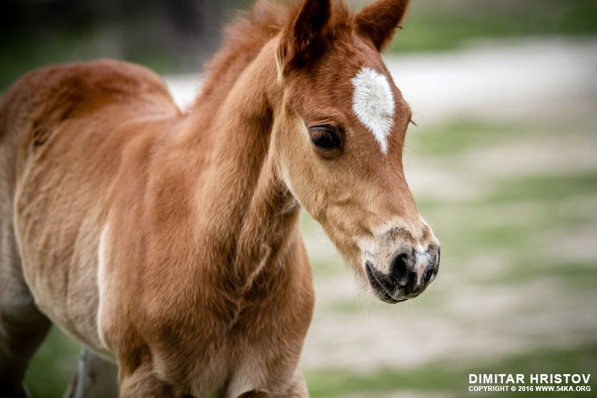 Little horse   Baby animal photography equine photography animals  Photo