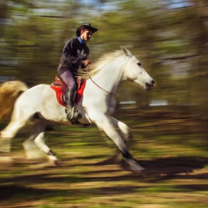 Man riding a beautiful white horse in autumn forest