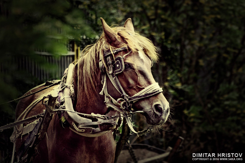Draft horse photography equine photography animals  Photo