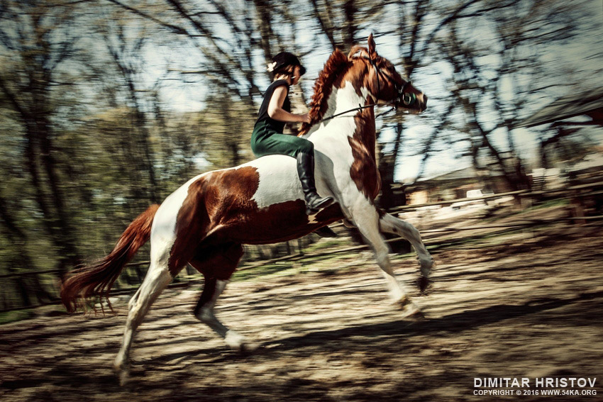 Girl riding paint horse photography featured equine photography animals  Photo