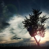 Blue sunset sky and lonely tree
