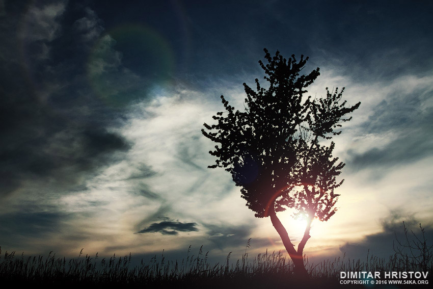 Blue sunset sky and lonely tree photography landscapes  Photo
