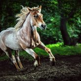 Beautiful strong horse galloping – Stallion in the forest