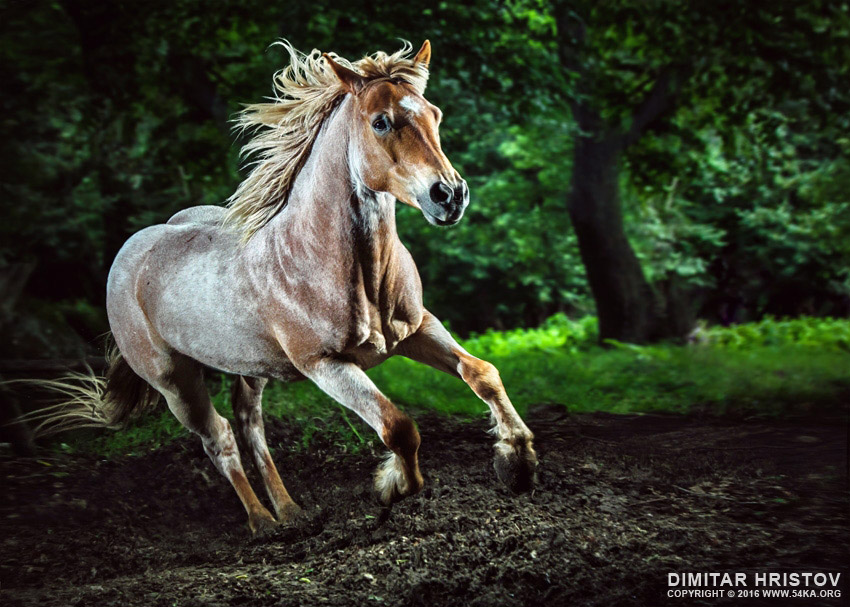Beautiful strong horse galloping   Stallion in the forest photography featured equine photography animals  Photo