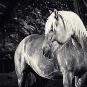 Equestrian black and white portrait