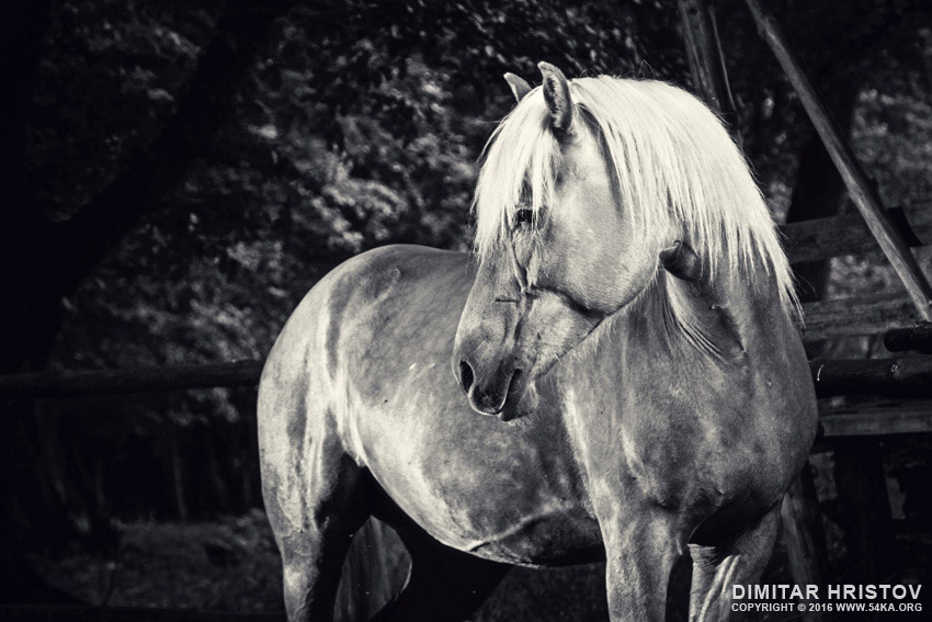 Equestrian black and white portrait photography equine photography black and white animals  Photo