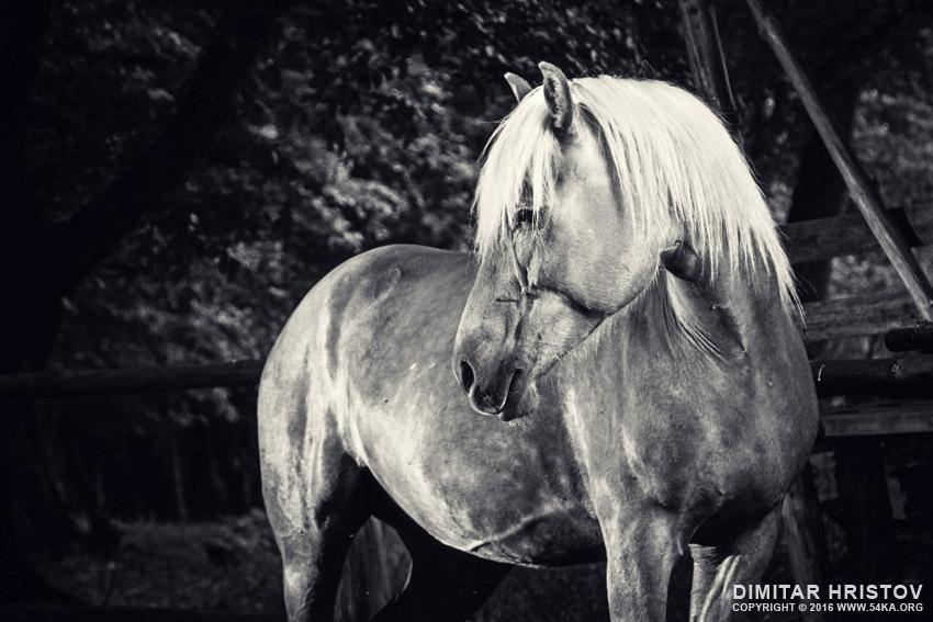 Equestrian black and white portrait photography equine photography black and white animals  Photo