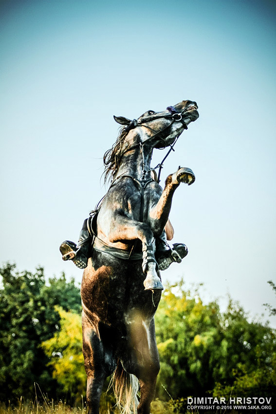 Black horse rearing up in the meadow - 54ka [photo blog]