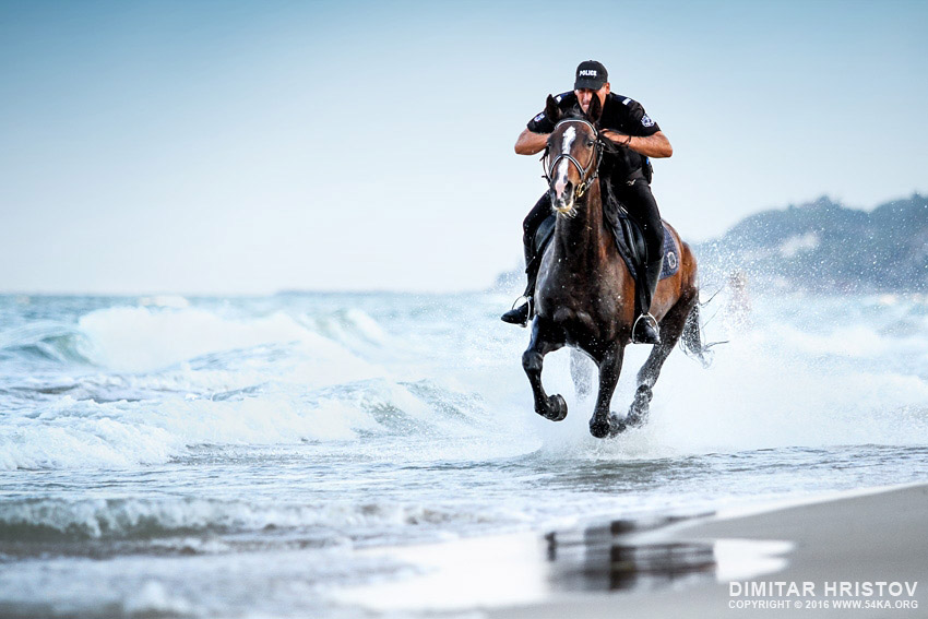 Black police horse running in the sea photography featured equine photography animals  Photo