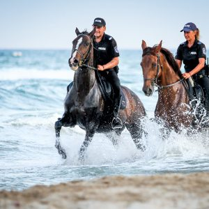 Police horses patrol galloping in the water