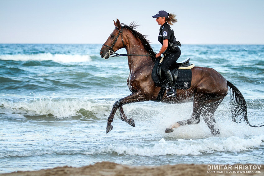 Police horses running in the water  54ka  photo blog