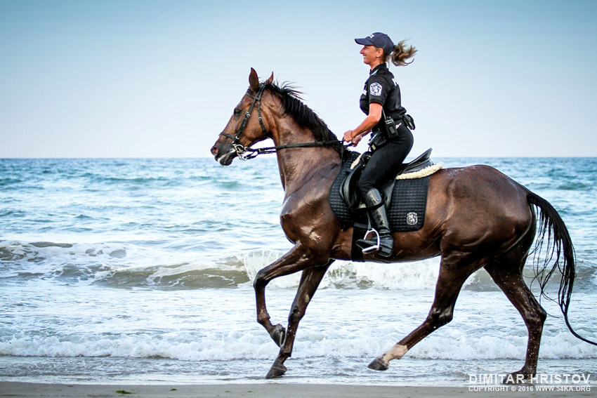 Police horses running in the water photography galleries featured  Photo