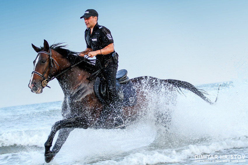 Policeman riding fast horse in the water photography top rated featured equine photography animals  Photo