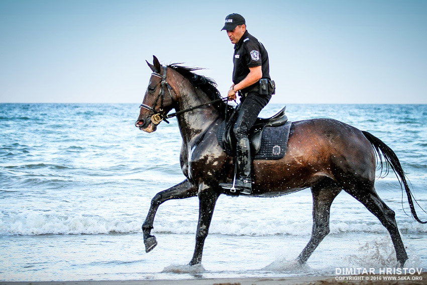 Policeman riding horse in the water on the beach photography featured equine photography animals  Photo