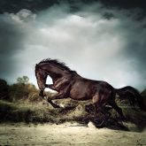 Beautiful black stallion horse running on the stormy sky