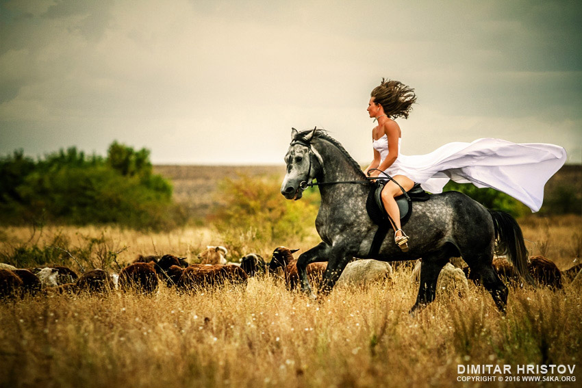 Beautiful woman wearing long white dress riding on black horse photography featured equine photography animals  Photo