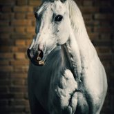 Horse portrait on the brick background