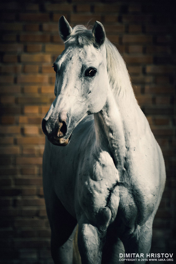 Horse portrait on the brick background photography equine photography animals  Photo