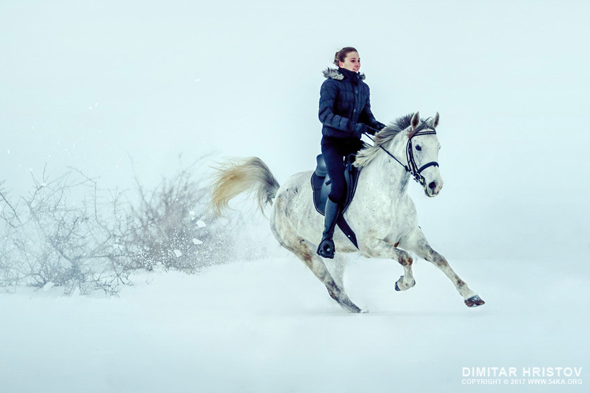 Girl rides horse in falling snow at dusk photography featured equine photography animals  Photo