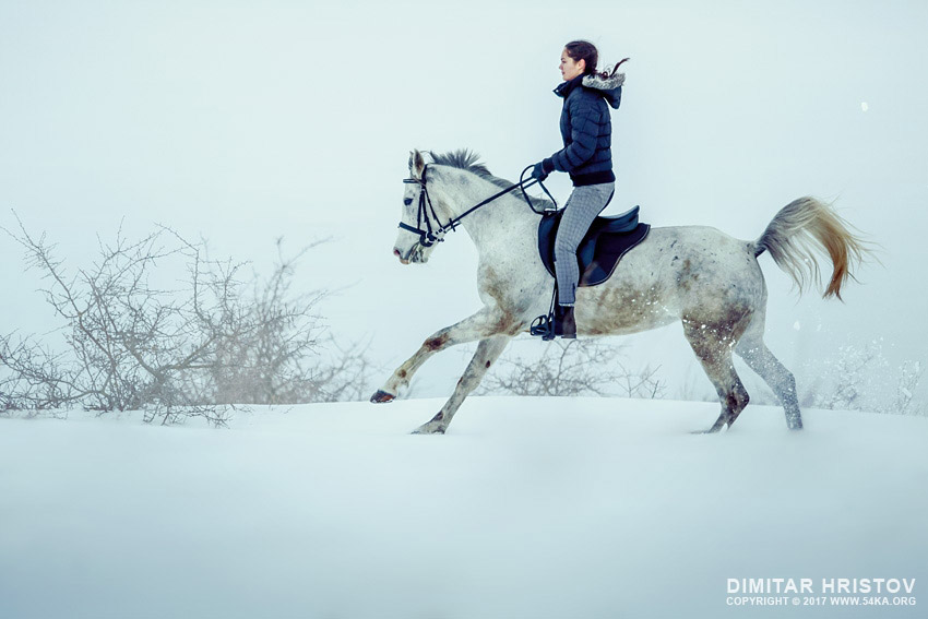 Running Horse In Snow Winter Landscape