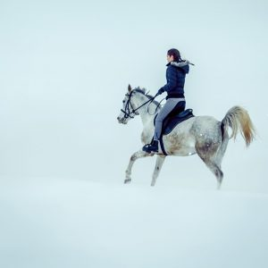 White horse on the snow